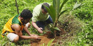 CULTIVO DEL COCO » Plantación y cuidados
